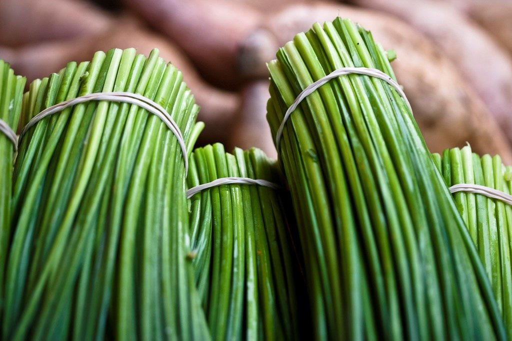 health benefits of chives - close-up